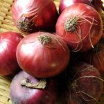 玉ねぎに含まれる栄養と、アンチエイジング、美容の効果・効能について