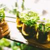 【厳選】インテリアに緑を置きたいなら人工の観葉植物(フェイクグリーン)がオススメ!